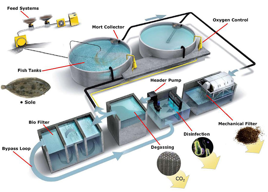 recycling aquaculture system Recirculating aquaculture systems cut the pollution and disease that occur in current fish farming operations many see it as the future of the industry.